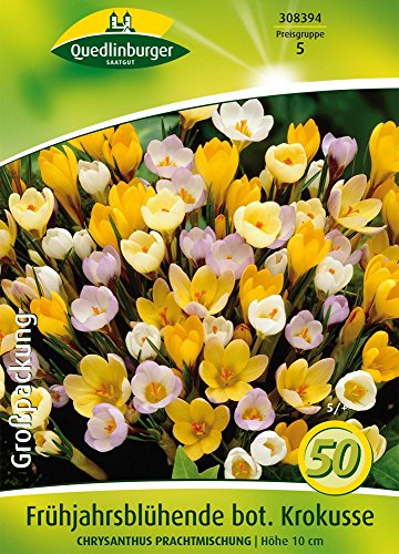 Quedlinburger 308393 Botanische Krokus Prachtmischung (50 Stück) (Krokuszwiebeln)