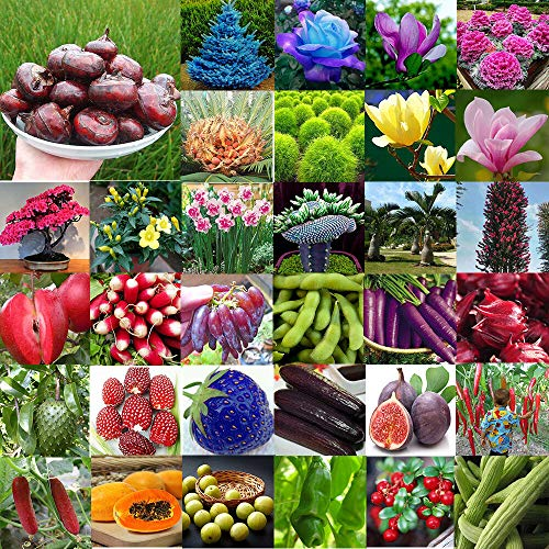 Samen-Paket: 56 Samen 100Pcs: Multi-Style-Hausgarten Seltene Samen Gemüse Blume Obst Samen Samen Dekor