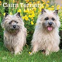 Cairn Terriers 2020 Calendar