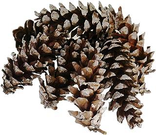 松ぼっくり 大きな スノー スタイル ナチュラル パインコーン 天然素材 松かさ クリスマス ツリー DIY の装飾 松笠 10個