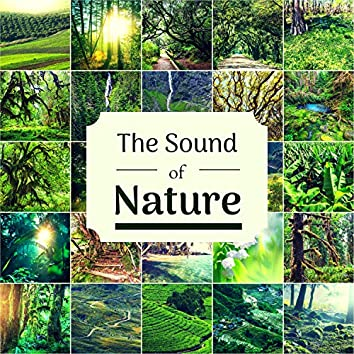 The Sound of Nature - Music with Natural Sounds for Focus, Study, Concentration