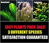 Aquarium Plants Discounts 15+ Stems - 3 Kinds - Anacharis, Rotala Indica, Ludwigia Repens