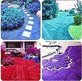 PLAT FIRM GERMINATIONSAMEN: 100 Stück Rare Blue Grass Seed Rasensamen Stauden Blumen im Freien Garten Pflanzen Sie
