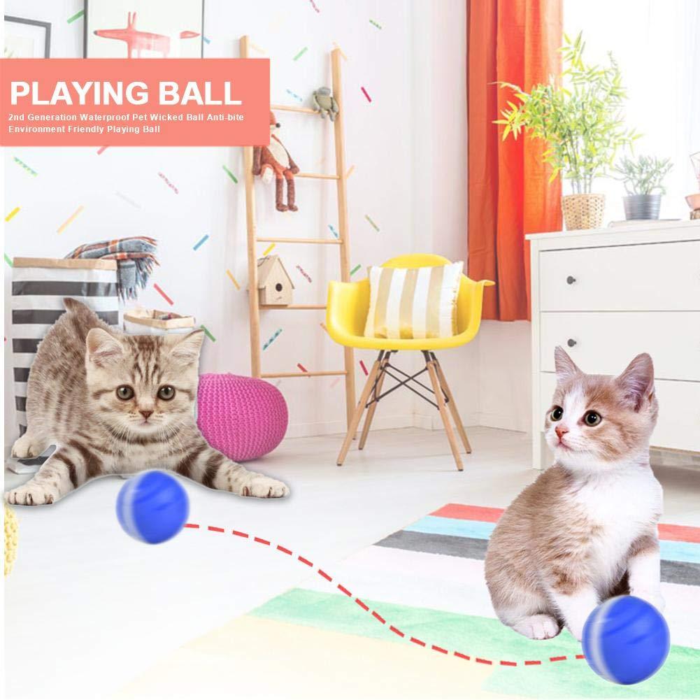 Wicked Ball, Gatos y perros Juguetes Wicked Balls Anti-mordida ...