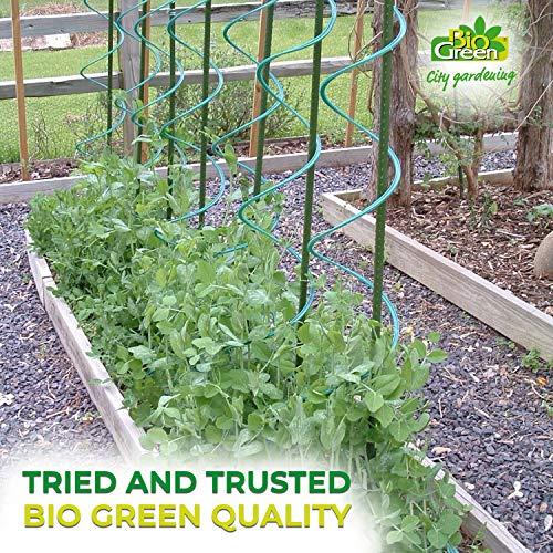 Bio Green Productos de Cultivo zarcillos, Negro: Amazon.es: Jardín