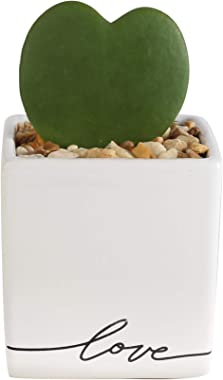 Costa Farms Live Hoya Heart, Gift Succulent-Like Plant, Love Ceramic, 5-Inches Tall