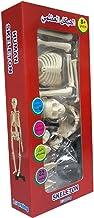 الهيكل العظمي للانسان ومكوناته واجزائه للاطفال عمر فوق 8 سنوات