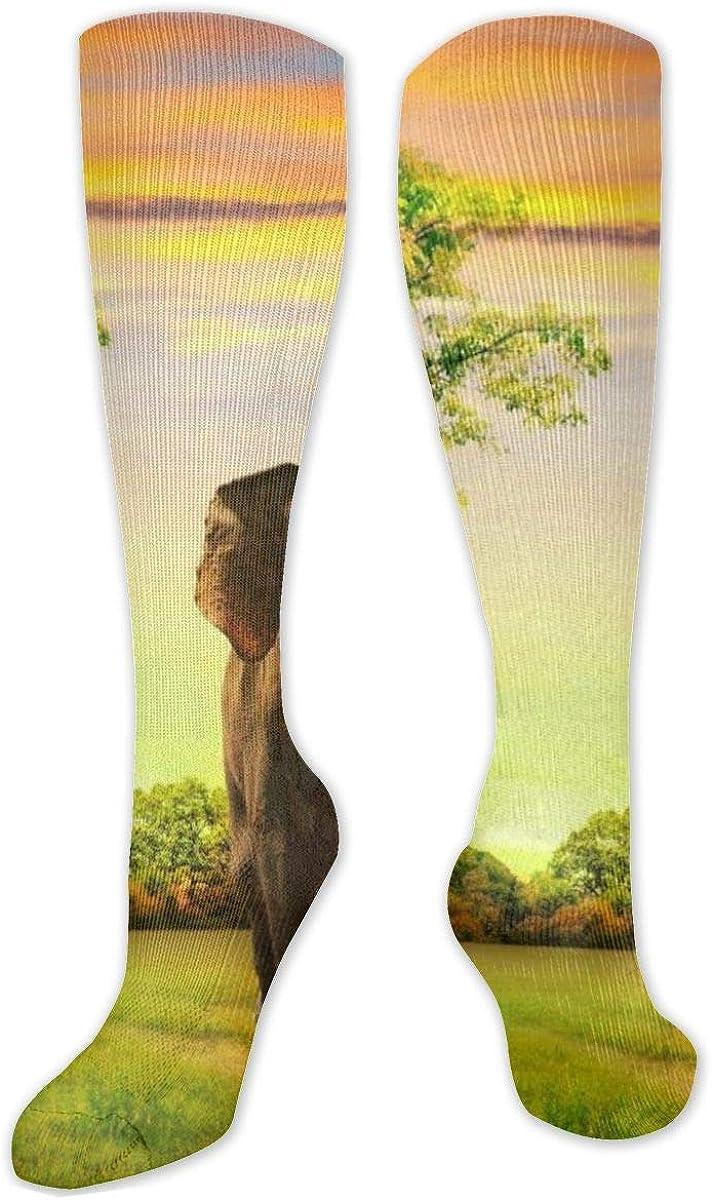 Grass Elephant At Dusk Knee High Socks Leg Warmer Dresses Long Boot Stockings For Womens Cosplay Daily Wear