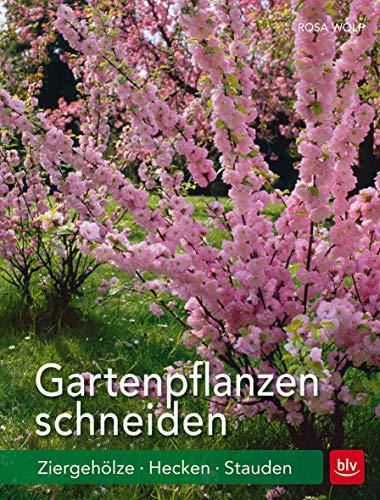 BLV Buchverlag GmbH & Co. Gartenpflanzen Bild