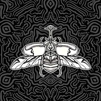 Canciones para Insectos