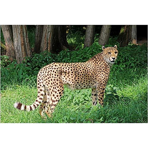 SANSHUI Puzzle di Legno 500-6000 Pezzi Wild Animal Ghepardo Serie Degno di Sfidare Difficile Giocattoli Educativi 0312 (Size : 1500 Pieces)