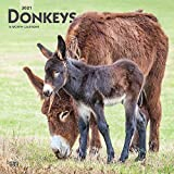 Donkeys 2021 12 x 12 Inch Monthly Square Wall Calendar, Domestic Animals