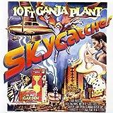 Songtexte von 10 Ft. Ganja Plant - Skycatcher