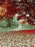 5D pintura de diamantes otoño hojas caídas mosaico paisaje bordado de diamantes hecho a mano punto de cruz kit de arte de diamantes de imitación A1 30x40cm