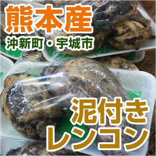 あいあい 熊本県産 泥付きレンコン (熊本沖新・宇城産)