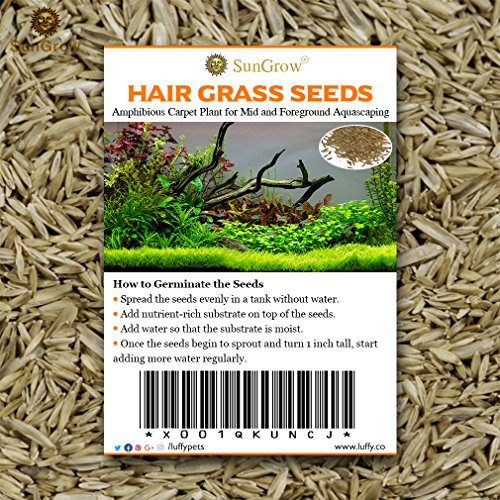 SunGrow Hair Grass Seeds, 0.35 Ounce, Mid or Foreground Tank Decor, Amphibious Carpet Aquarium Plant, Can Grow Fast Up to 4 Inches, Creeper Plant Covers Tank Surface Quickly, Easy Maintenance, 1 Pack