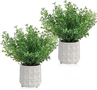 2 piezas de plantas en macetas de pasto perlado