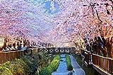 adrium Leinwand-Bild 30 x 20 cm: Cherry Blossoms, busan