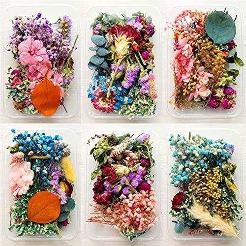 2 Cajas Flores Secas Naturales, DIY Conjunto de Flores secas Decoración Floral Flores Secas Mezcladas Flores Prensadas...
