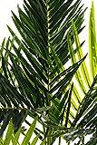Sarah B XXL Areca Palme. Farnpalme, Kokospalme JWS2255 Riesige künstliche 140cm hohe Kunstpflanze, Kunstblume, Kunstbaum, Zimmerpflanze künstlich - 3