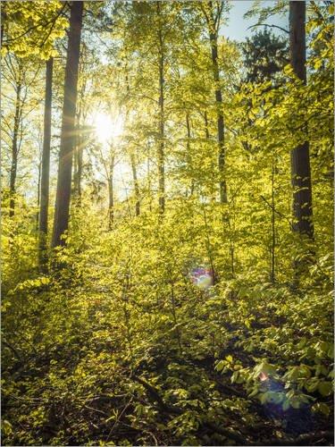 Posterlounge Acrylglasbild 30 x 40 cm: Wald von Siegfried Heinrich - Wandbild, Acryl Glasbild, Druck auf Acryl Glas Bild