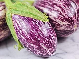 Best listada de gandia eggplant Reviews