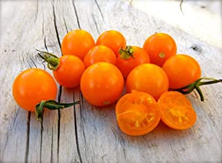 Sungold Select Tomato Seeds (20 Seed Pack)