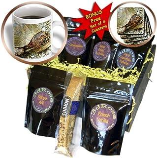 3dRose Lee Hiller Hot Springs National Park Wildlife - Male Box Turtle - Coffee Gift Basket (cgb_7612_1)