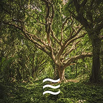 Soft Soothing Natural Forest Sounds
