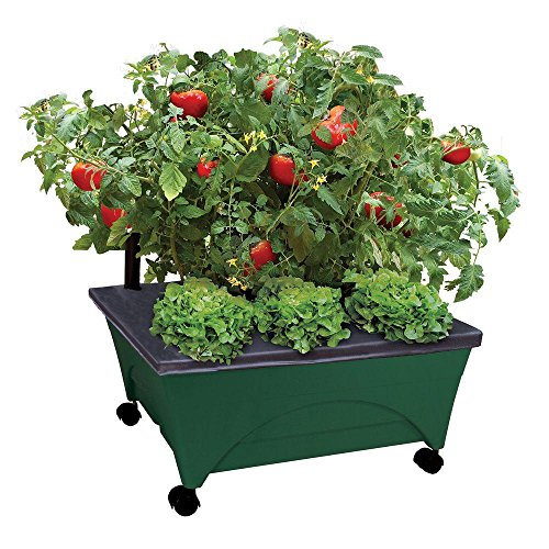 Emsco Group City Picker Raised Bed Grow Box – Self Watering and Improved Aeration – Mobile Unit with Casters - Hunter Green