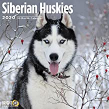2020 Siberian Huskies Wall Calendar by Bright Day, 16 Month 12 x 12 Inch, Cute Dogs Puppy Animals Chukcha Canine