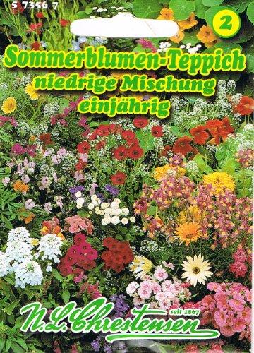 Sommerblumen Teppich niedrige Mischung unermüdlich blühend