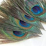 Winomo - 100 plumas de pavo real, 25 – 30 cm, plumas de pavo real, plumas para ojos, artesanía, decoración, arte, vestido, sombrero, boda, fiesta, disfraz