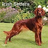 Irish Setters - Irish Setter 2020 - 16-Monatskalender mit freier DogDays-App: Original BrownTrout-Kalender [Mehrsprachig] [Kalender] (Wall-Kalender)