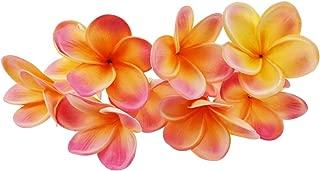 Best pink frangipani flowers Reviews