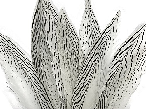 """Moonlight Feather 