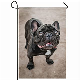 Ahawoso Seasonal Garden Flag 12x18 Inches Canine Brown Breed Black French Bulldog Adorable Camera Cute Dog Domestic Design Home Decorative Outdoor Double Sided House Yard Sign