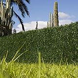 Catral 43020013 Seto Dense, Verde, 300x3x100 cm