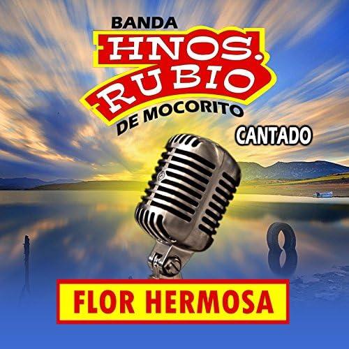 Banda Hnos. Rubio de Mocorito