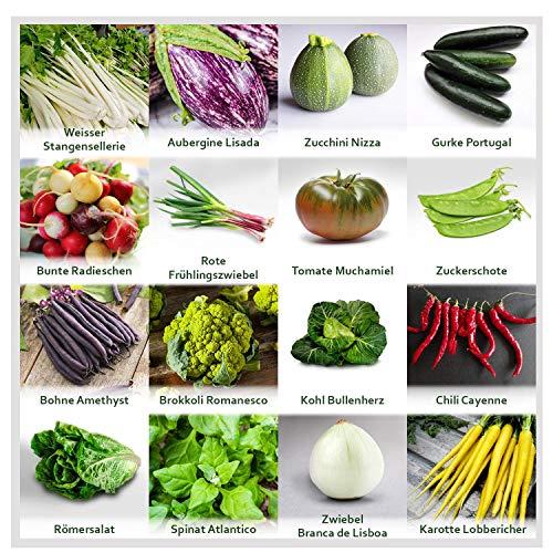 Gartengemüse Pflanzen Samen Set | Saatgut und Anzuchtset mit 16 Gemüse Sorten und 445 Pflanzensamen aus Portugal | 100% Natur Saat (Keine Chemie/künstliche Wachstums-Helfer)