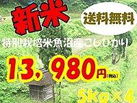 平成28年新潟県産特定産地米 (魚沼産特別栽培米5㎏×4)