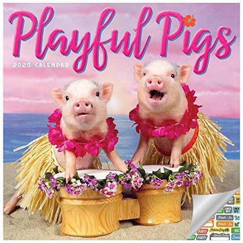 Playful Pigs Calendar 2020 Set - Deluxe 2020 Playful Pigs Wall Calendar with Over 100 Calendar Stickers (Playful Pigs Gifts, Office Supplies)