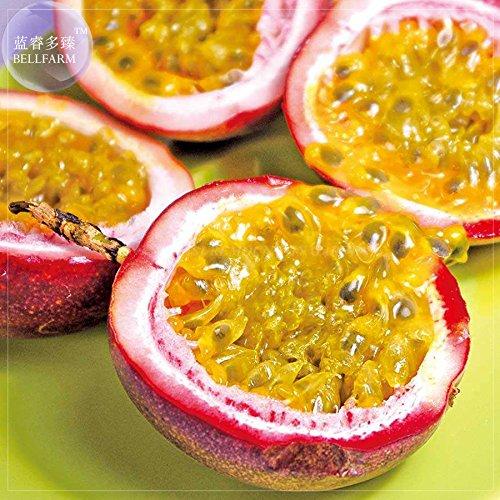 Pinkdose® 2018 Nouveautés !!Heirloom Purple Passion Fruits, Pack Professionnel, 40 Graines, Passiflora edulis Aigre Doux Fruit Oeuf Nutritif E4246