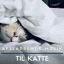 Best katte katte mp3 Reviews