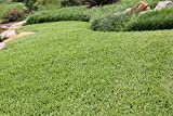 Nature's Seed Buffalograss Seed Blend, 500 sq. ft.