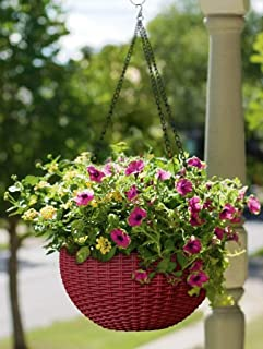 hanging pot include plant live
