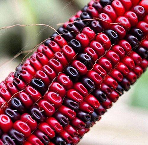 20pcs/sac noir rouge jaune corns graines de légumes graines de fruits jardin de bonsaïs semences potagères pour plantes à la maison rouge