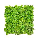 GJS Moosbild - Moosmatte/Moosplatte (30x30cm) aus echtem Islandmoos für Mooswand/Pflanzenbild/Deko-Paneele zum Basteln/selber Machen (1 Stück (ca. 0,1m²), hellgrün)