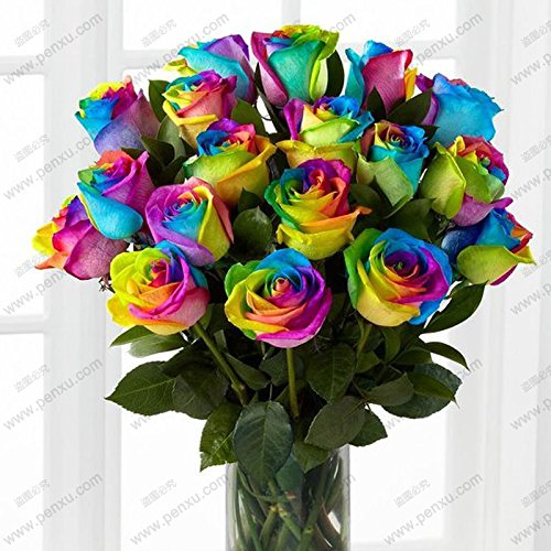 CHINESE ROSE GRAINES Rose Blanc Rouge Violet Vert Blue Rainbow Rose Seeds 100 particules / sac