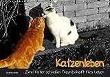 Katzenleben - Zwei Kater schließen Freundschaft fürs Leben (Wandkalender 2019 DIN A3 quer): Felix und Raspel sind zwei befreundete Kater, die eine ... verbindet. (Monatskalender, 14 Seiten )